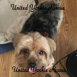Adoption Bio For Overweight Dog